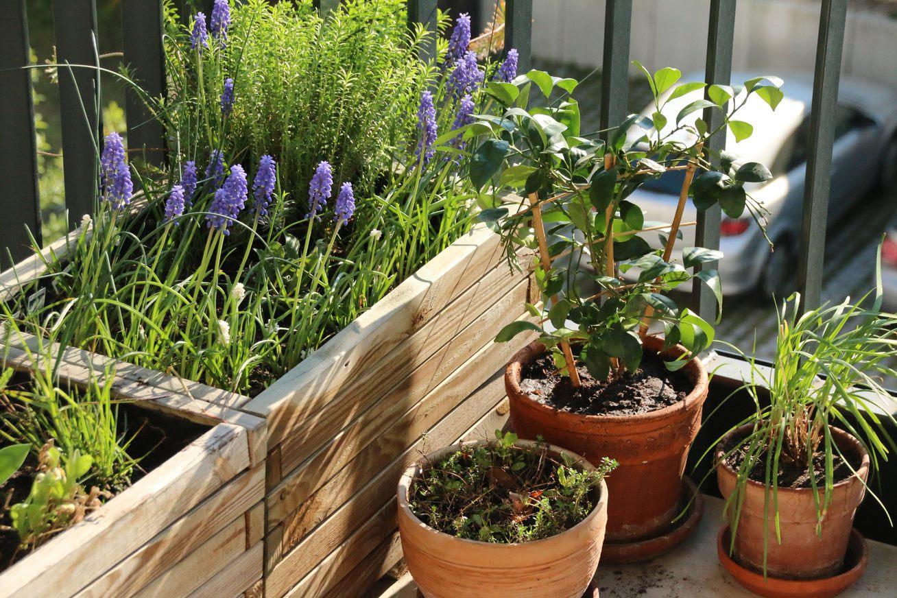 Nabu Tipps für einen grünen Balkonen   Naturschutz Zuhause   www ...